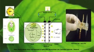 microphotosynthetic power cell